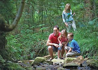 Enjoy forest walks near Cropton Lodges