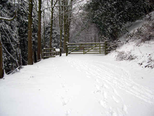 snow in cropton wood