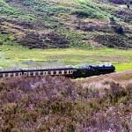 north york moors railway heather