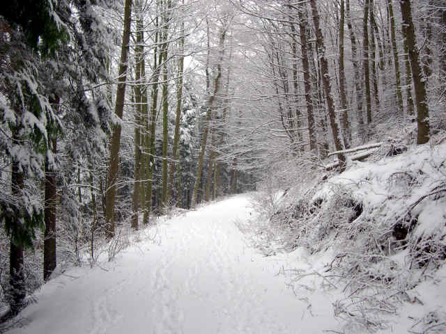 snow scene in cropton on woodland walk